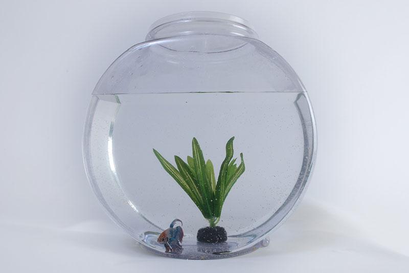 Fishbowl Game: Ultimate Guide